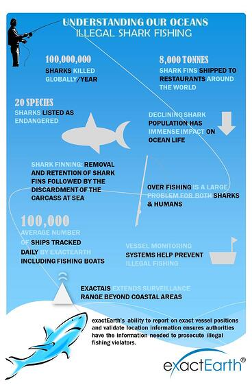 Shark_Week_Infographic