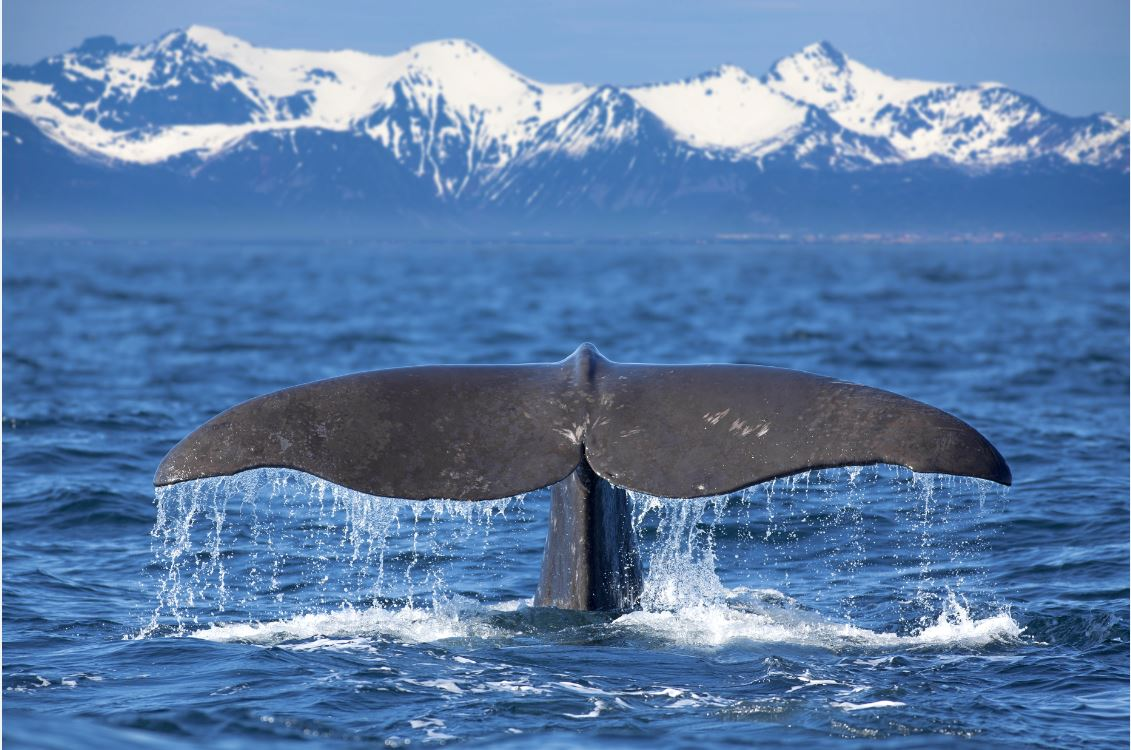 Satellite AIS Vessel Monitoring for Whale Ship Strike Risk